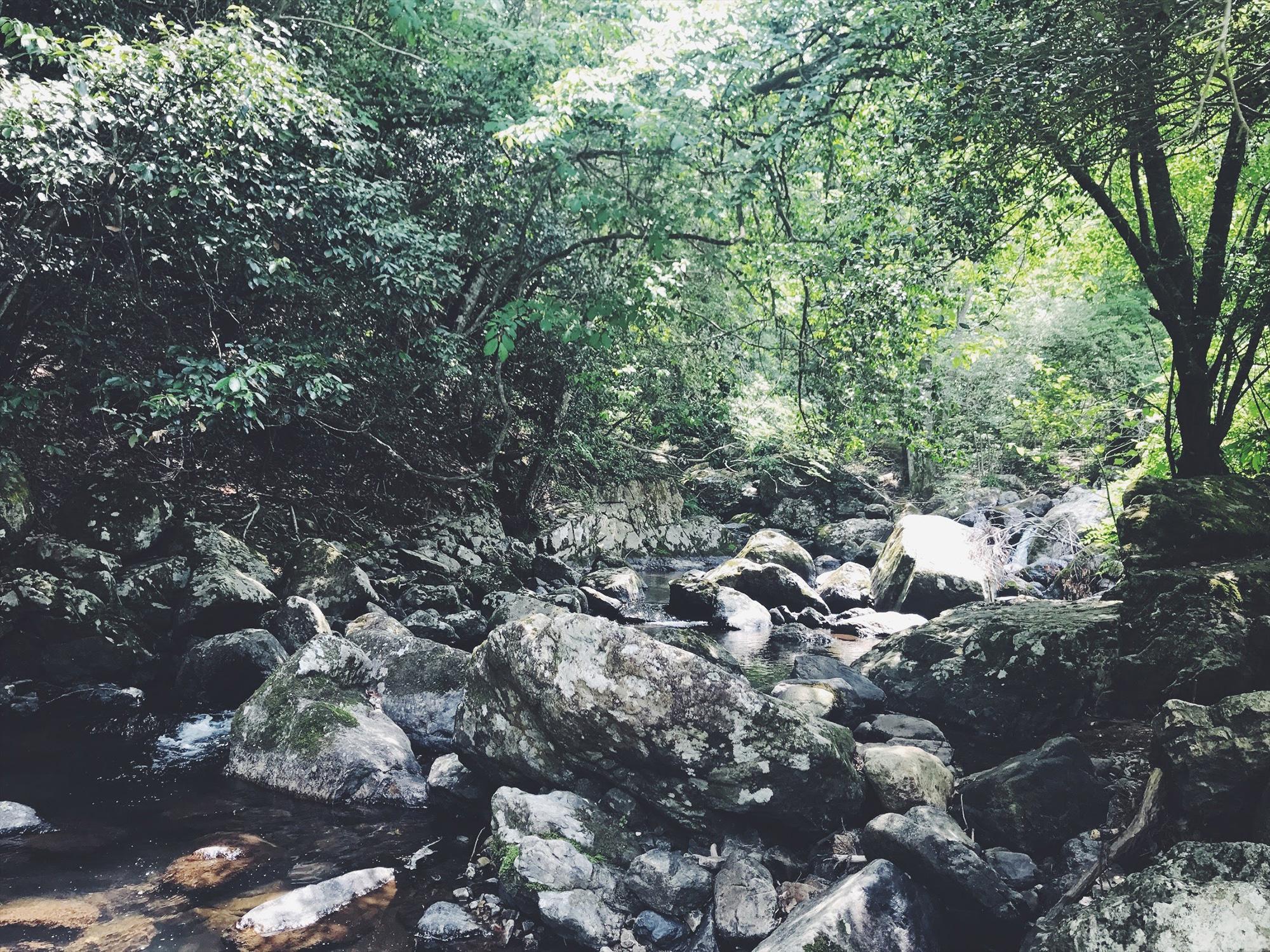 るり渓 渓流