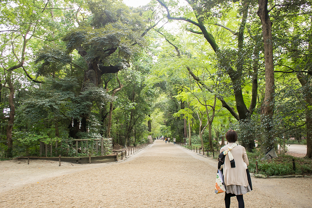 下鴨神社 糾の森