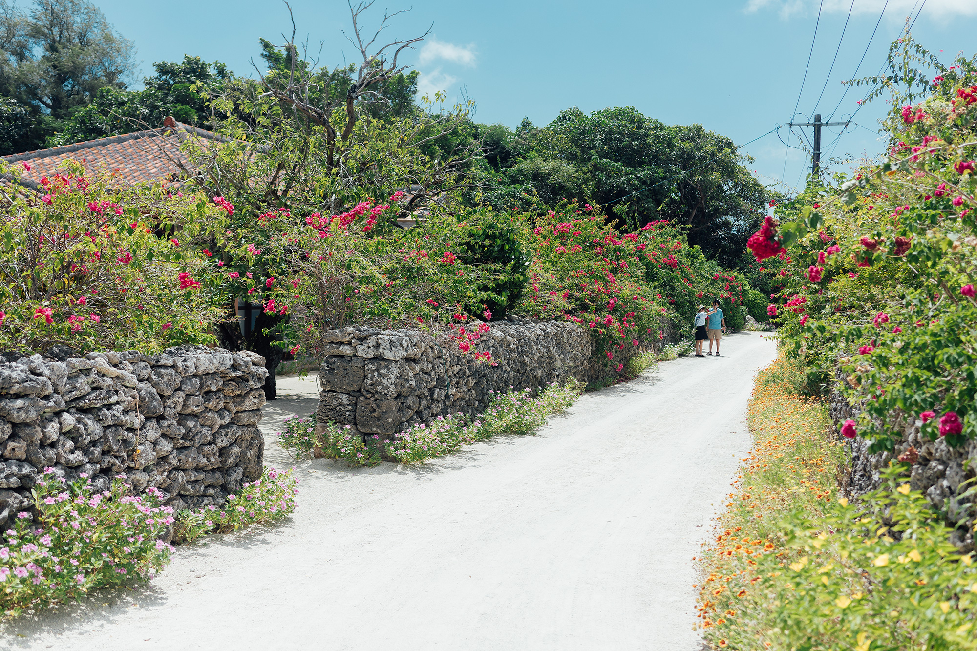 竹富島の花